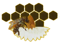 Pravi domaći prirodni med – BAMIS prodaja meda